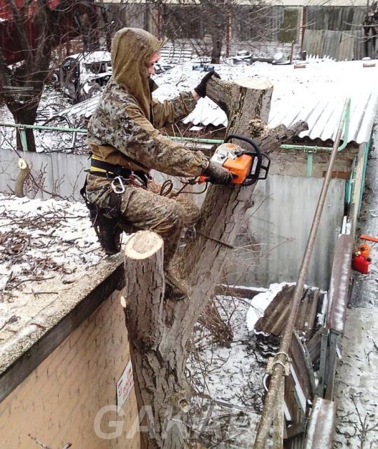 Спил и обрезка деревьев любой сложности,  Краснодар
