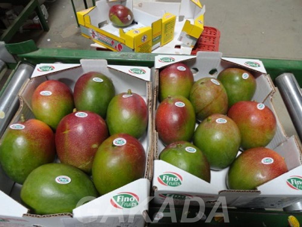 Предлагаем прямые поставки манго, Вся Россия