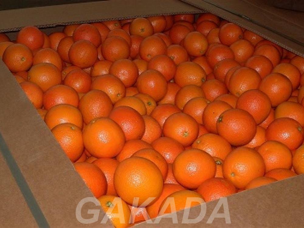 Предлагаем фрукты лимон апельсин мандарин, Вся Россия
