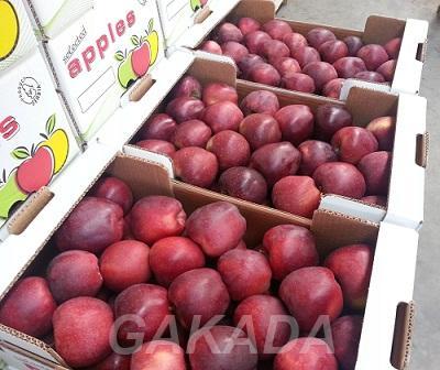Предлагаем прямые поставки яблока, Вся Россия