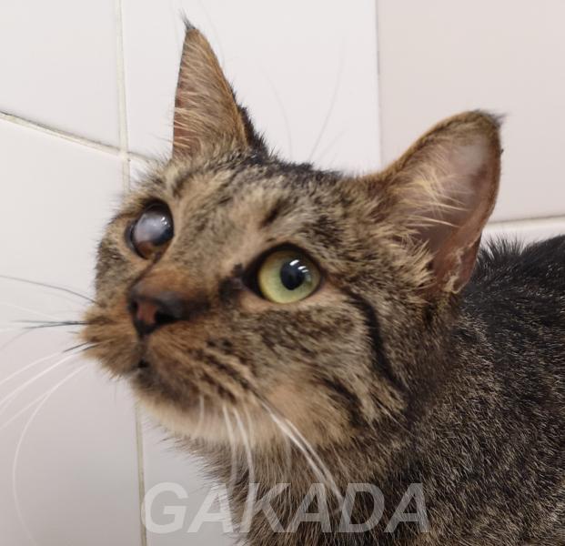 Удивительно ласковая котодевочка ищет дом,  Санкт-Петербург