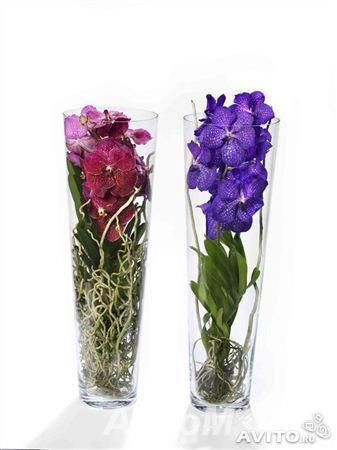 Орхидея Ванда в стеклянной вазе,  Москва