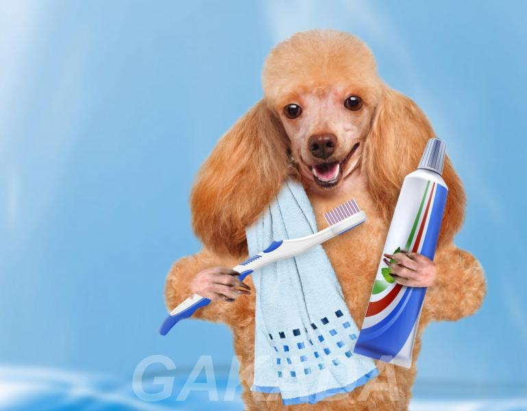 Курсы Ультразвуковая чистка зубов собакам,  Москва