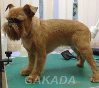 Тримминг собак профессионально и не дорого,  Москва