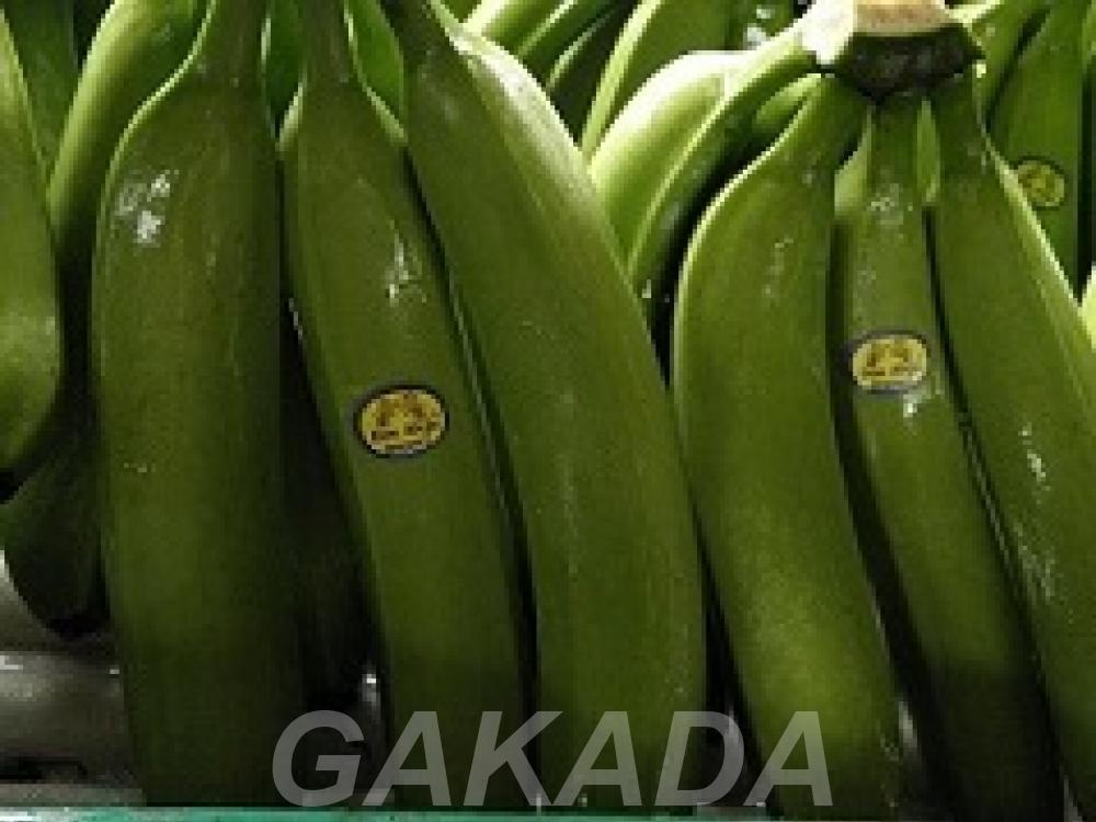 Прямые поставки бананов, ананаса с Эквадора, Вся Россия