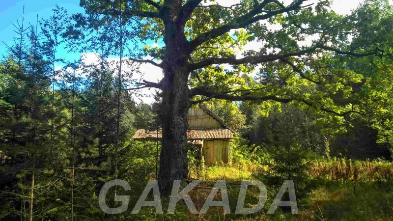 Шикарный земельный участок на сказочной лесной поляне, Палкино