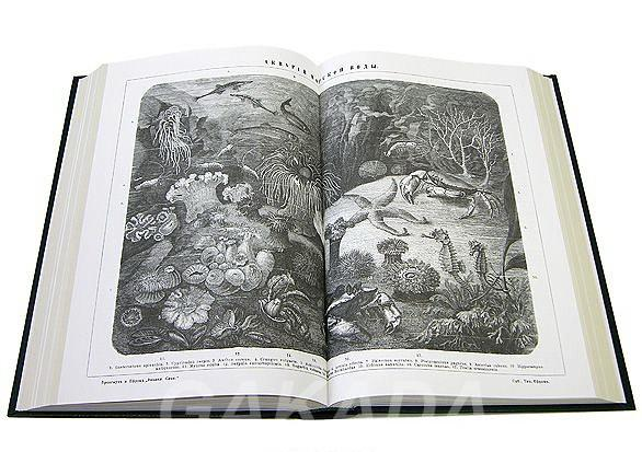 Эксклюзивный словарь, Вся Россия