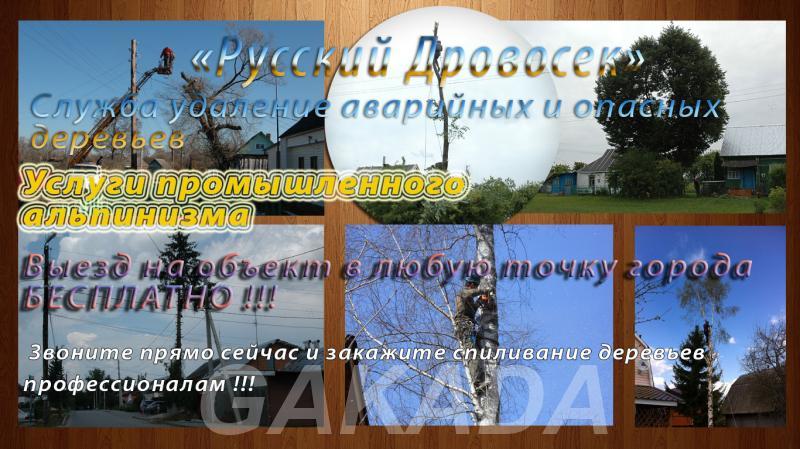 Спил деревьев в Белгороде и области,  Белгород