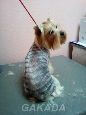Ветеринарный кабинет Бося предоставляет лечение животных,  Кострома