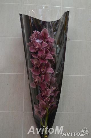Ветка орхидеи цимбидиум с доставкой,  Москва