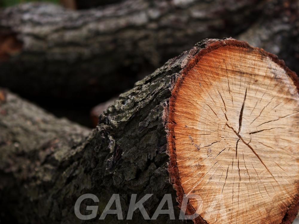 Спил деревьев Кронирование, Вся Россия