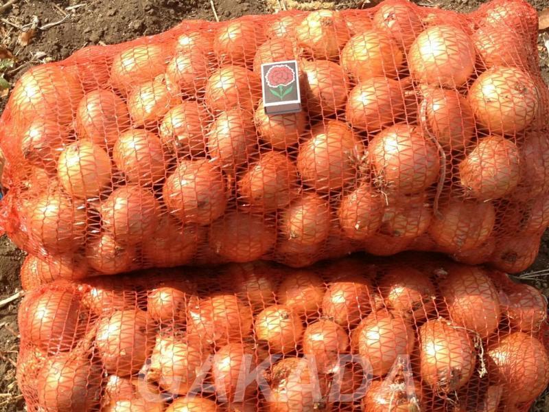 Овощи оптом БелАгроГрупп предлагает к оптовой поставке,  Воронеж
